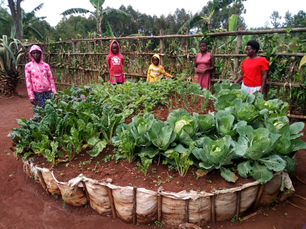 Kitchen Garden Strategy Within Child Headed Household Is Improving