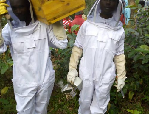 The Great Nyungwe Forest Belt – Bee keeping Scheme