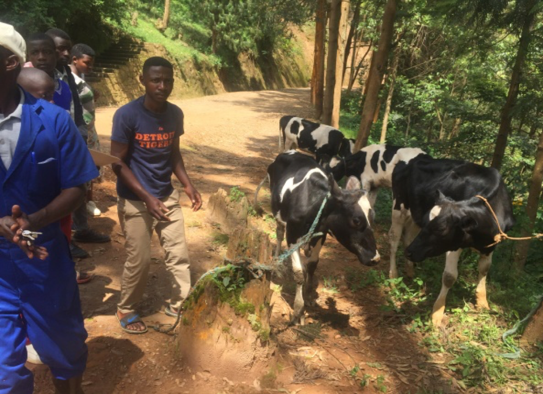 Livestock for the vulnerable Child Headed Households